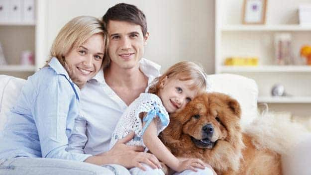 Wills & Trusts dog-young-family Direct Wills Stockwood